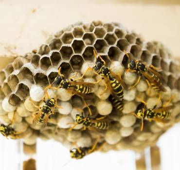 Wasp Nest Removal NI